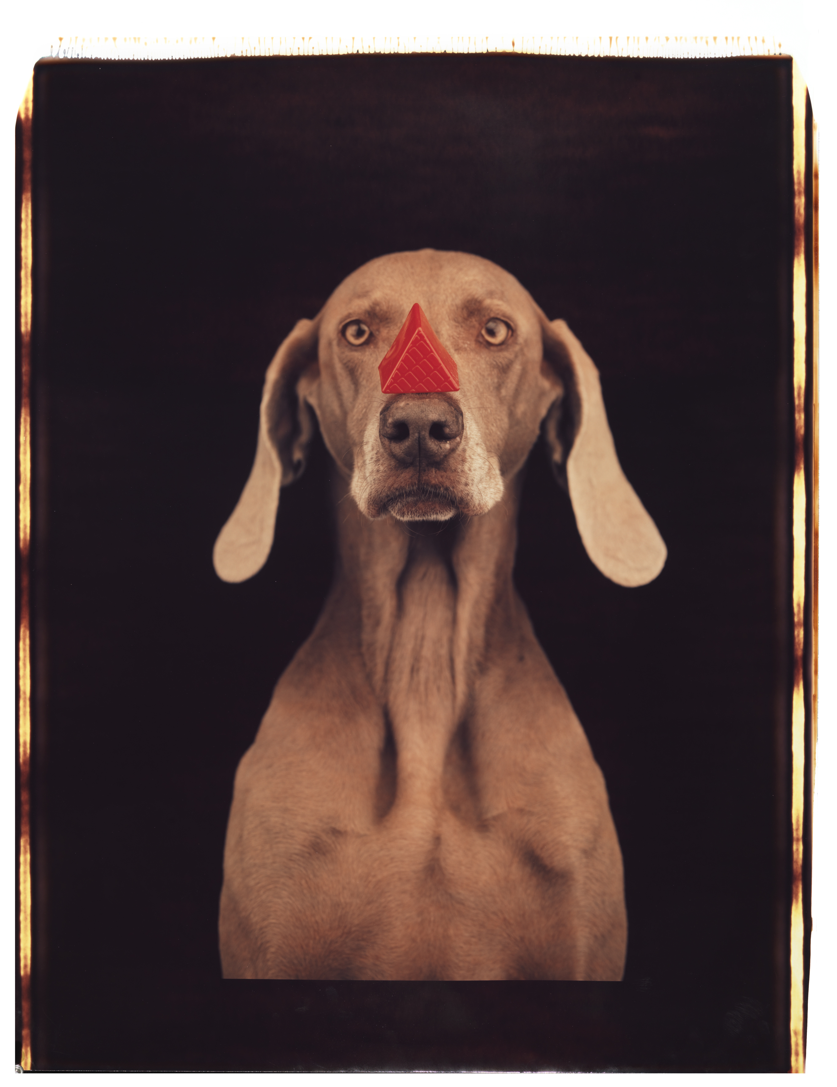 William Wegman: Red Triangle, 1993, (Seite 274) © William Wegman / courtesy Schirmer/Mosel