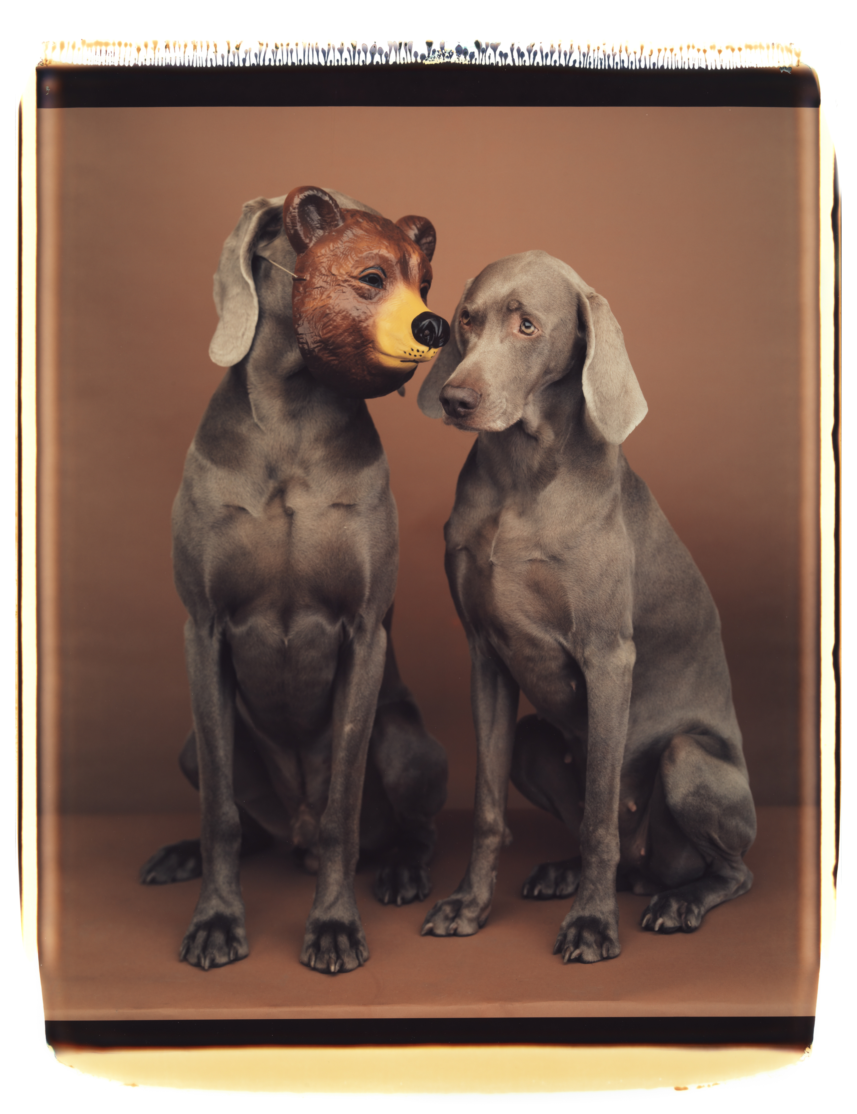 William Wegman: Secret, 1994 (Seite 29) © William Wegman / courtesy Schirmer/Mosel