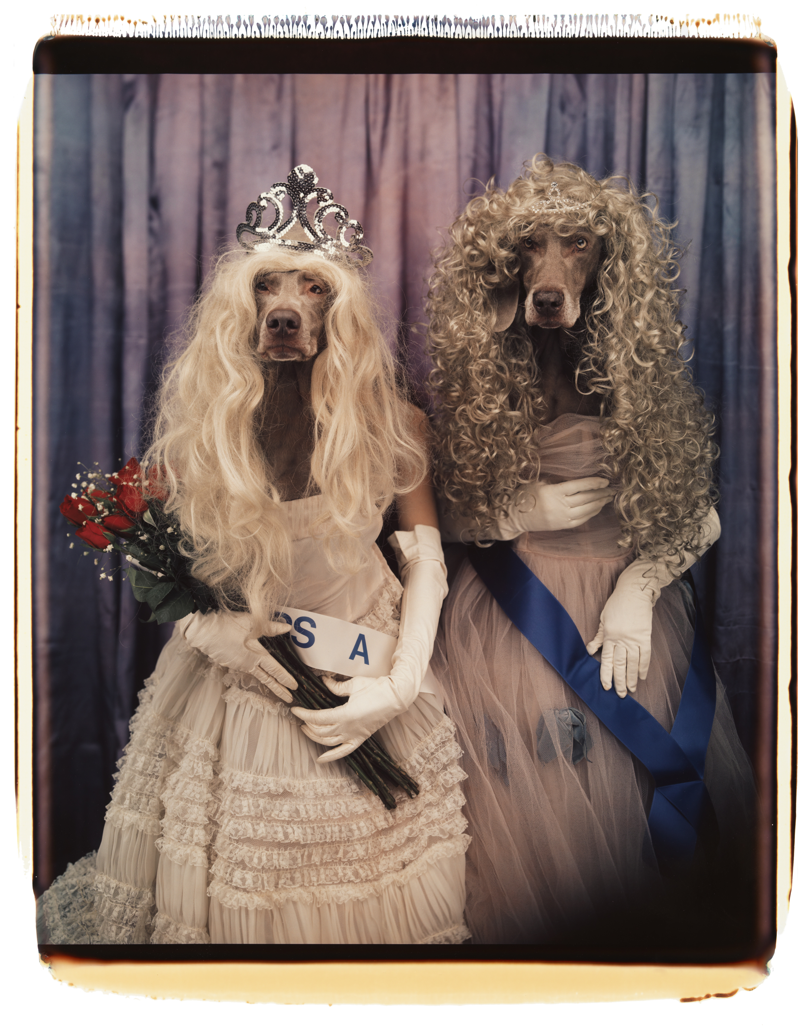 William Wegman: Miss & Misses, 1995 (Seite 178) © William Wegman / courtesy Schirmer/Mosel