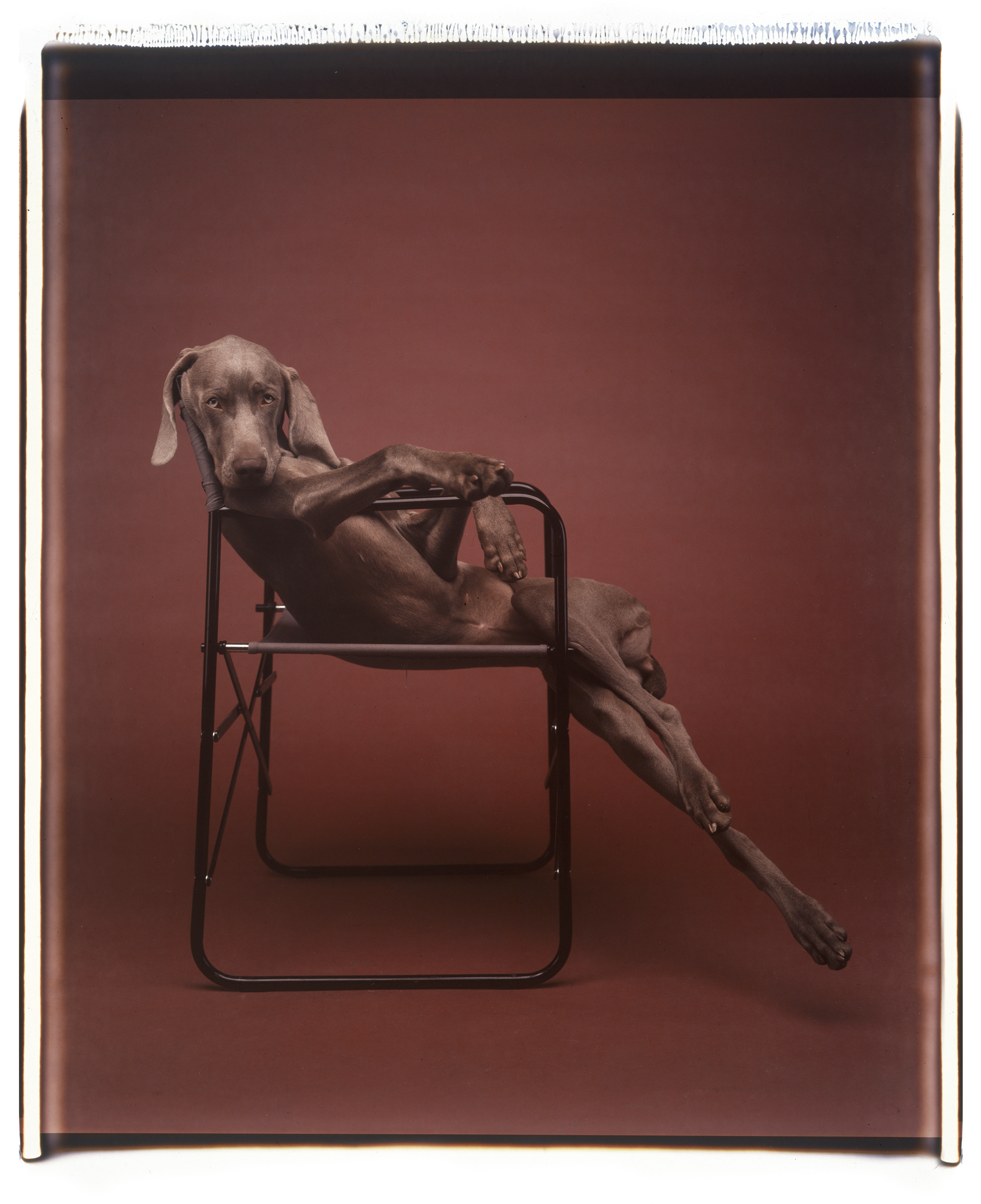 William Wegman: Lolita, 1990 (Seite 318) © William Wegman / courtesy Schirmer/Mosel